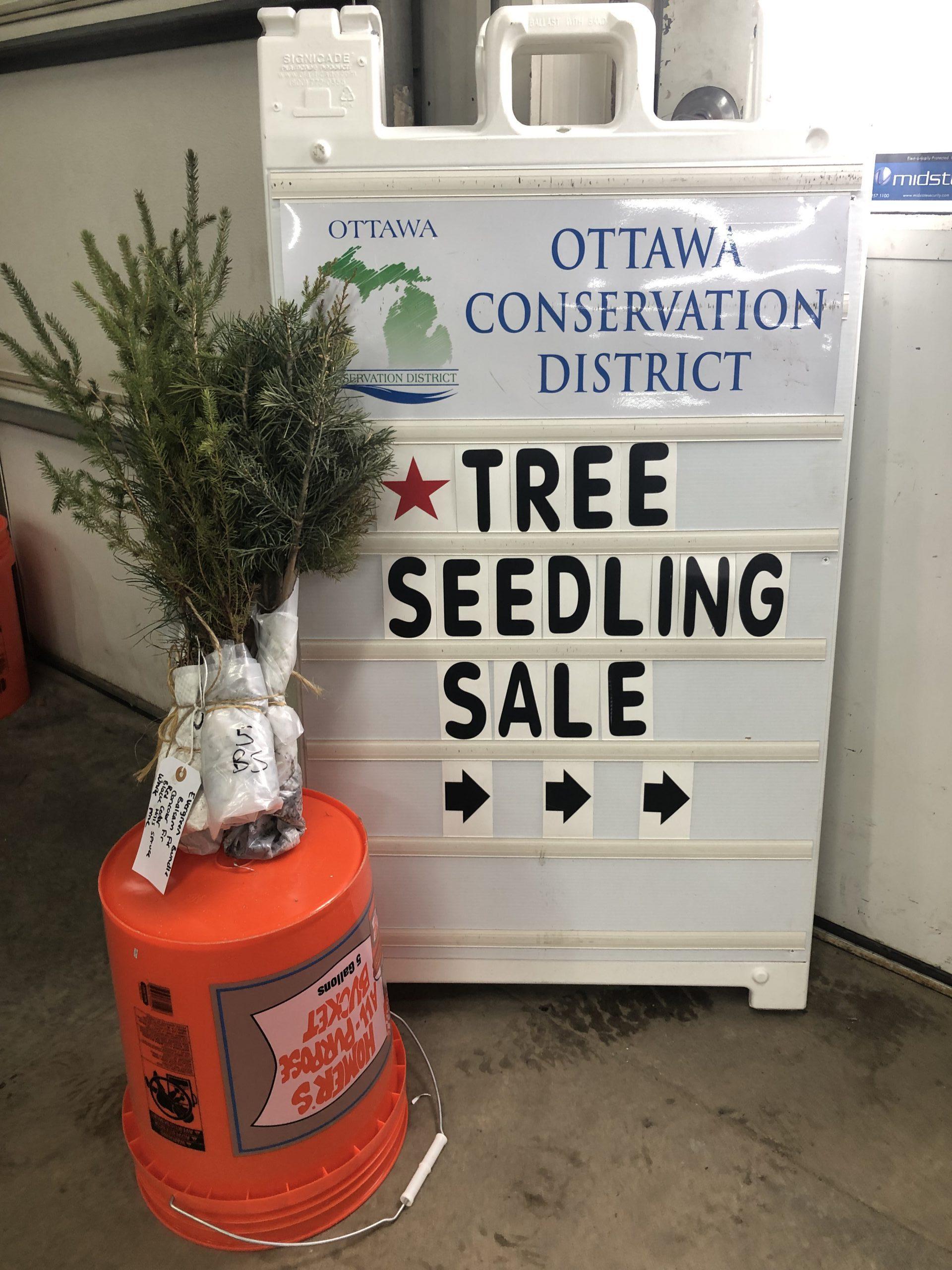 Tree Seedling Sale